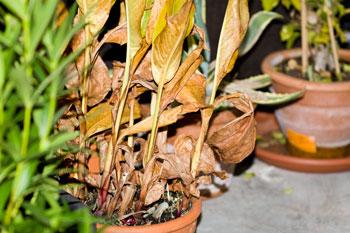 Pflanzen winterfest