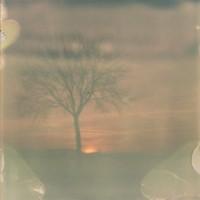 Polaroid Bild