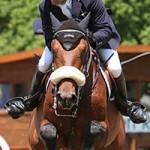 Pferd International in München Riem