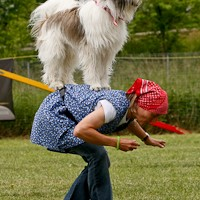 Tag der Hunde 2009 Beilngries