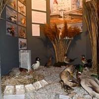 Ausstellung Enten