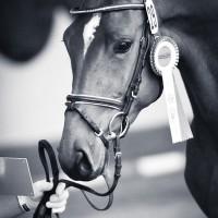 Fine Art Pferdesport Fotografie