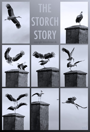 THE STORCH STORY