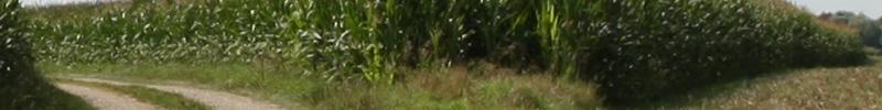 Canon 1D Mark III - Ferne